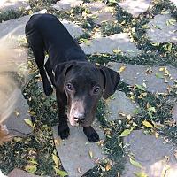 Adopt A Pet :: Toronto - Evergreen, CO