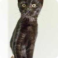 Adopt A Pet :: Wickham - St. Louis, MO