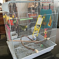 Parakeet - Other for adoption in Pahrump, Nevada - Parakeets