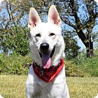 Adopt A Pet :: Niko - San Diego, CA