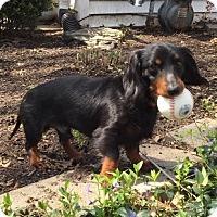 Adopt A Pet :: Marco - Beavercreek, OH