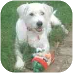 Terrier (Unknown Type, Medium) Mix Dog for adoption in Pittsboro/Durham, North Carolina - Lila