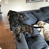 Adopt A Pet :: Gene - Parsippany, NJ