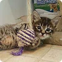 Adopt A Pet :: Blynken - McPherson, KS