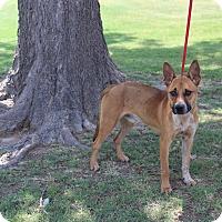 Adopt A Pet :: A01 Marky - Odessa, TX