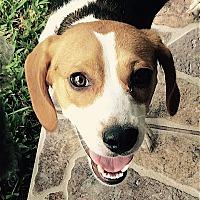 Adopt A Pet :: Chloe - Houston, TX