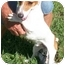Photo 2 - Jack Russell Terrier Mix Dog for adoption in Slidell, Louisiana - Uncle Fester