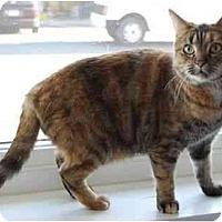 Adopt A Pet :: Abby - Modesto, CA