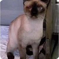 Adopt A Pet :: Ari - Makawao, HI