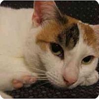 Adopt A Pet :: Janelle - Jenkintown, PA