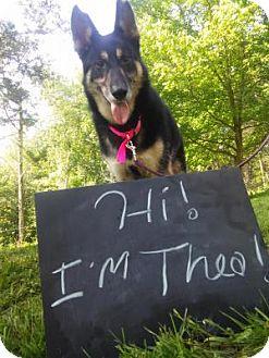 German Shepherd Dog/Siberian Husky Mix Dog for adoption in Louisville, Kentucky - Thea