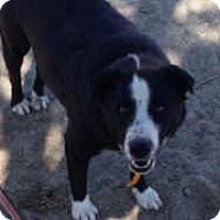 Adopt A Pet :: Midge - Phelan, CA