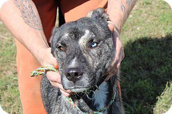 Australian Cattle Dog Dog for adoption in Harmony, Glocester, Rhode Island - Mary J