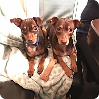 Adopt A Pet :: Daisy and Henry - Oviedo, FL