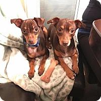 Adopt A Pet :: Daisy and Henry - Oviedo, FL