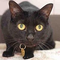 Adopt A Pet :: LINDA - Denver, CO