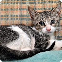 Adopt A Pet :: Drake - Richmond, VA
