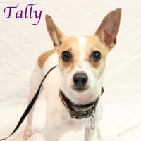 Adopt A Pet :: Tally - Bradenton, FL