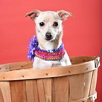 Adopt A Pet :: Edina - Houston, TX