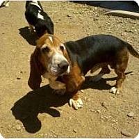 Adopt A Pet :: Roscoe - Acton, CA