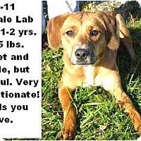 Adopt A Pet :: # 577-11 @ Animal Shelter - Zanesville, OH