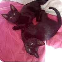 Adopt A Pet :: Jupiter and Pluto - Troy, OH