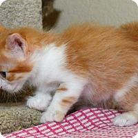 Adopt A Pet :: Jon Thomas - Davis, CA