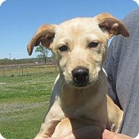 Adopt A Pet :: Jubalee - Greenville, RI
