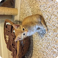 Adopt A Pet :: Oliver SO SWEET - Tunica, MS