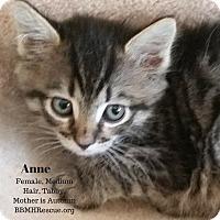 Adopt A Pet :: Anne - Temecula, CA