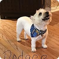 Adopt A Pet :: DODGER HAS BEEN ADOPTED! - Frisco, TX