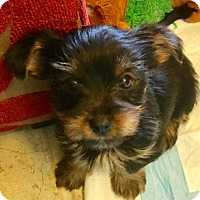 Adopt A Pet :: Carson & Chad - Ft. Lauderdale, FL