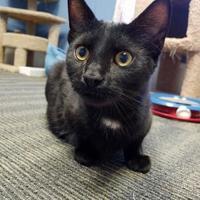 Adopt A Pet :: Montego - Allentown, PA