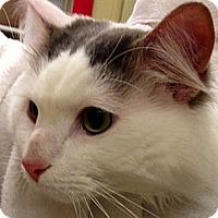 Adopt A Pet :: Babar - Green Bay, WI