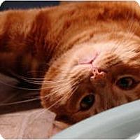 Adopt A Pet :: Mango - Fredericton, NB