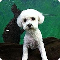 Adopt A Pet :: Jack - Goleta, CA