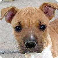Adopt A Pet :: Baby Addie - Oakley, CA