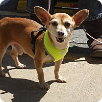 Adopt A Pet :: Rocky - Mt Gretna, PA