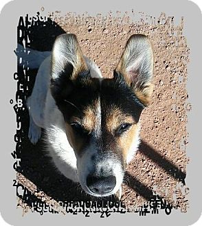 Australian Cattle Dog Dog for adoption in Pueblo, Colorado - Mykah (Mee-Kuh)