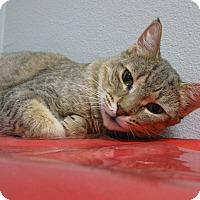 Adopt A Pet :: M O L L Y - Brea, CA