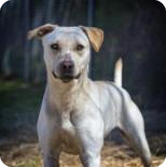 Retriever (Unknown Type) Mix Dog for adoption in Columbus, Georgia - Julieta 1637