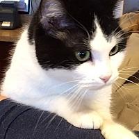 Adopt A Pet :: Melody - Mt. Prospect, IL