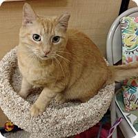 Adopt A Pet :: Lucy -Adoption Pending! - Colmar, PA