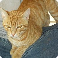 Adopt A Pet :: Yoda - Mexia, TX