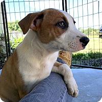 Adopt A Pet :: Kelsey - St. Francisville, LA