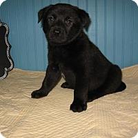 Adopt A Pet :: Rubble - KANNAPOLIS, NC