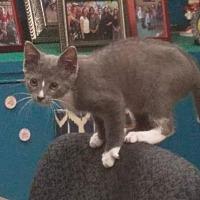 Adopt A Pet :: TROI - Hazlet, NJ