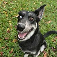 Adopt A Pet :: Luka - Huntsville, AL