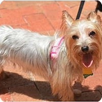 Adopt A Pet :: Matilda - Fairfax, VA