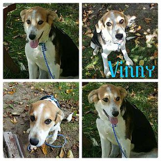 Beagle Mix Puppy for adoption in Garden City, Michigan - Vinny